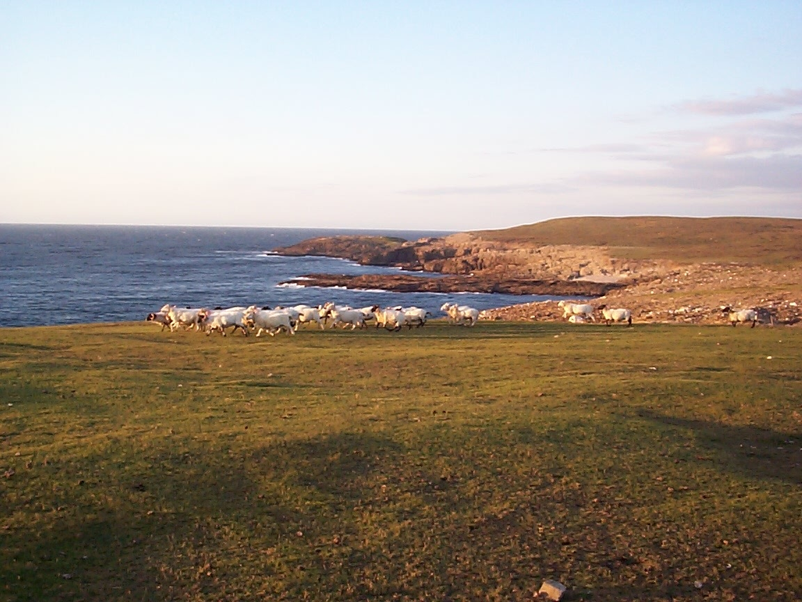 Cliffs areounf Glenlara