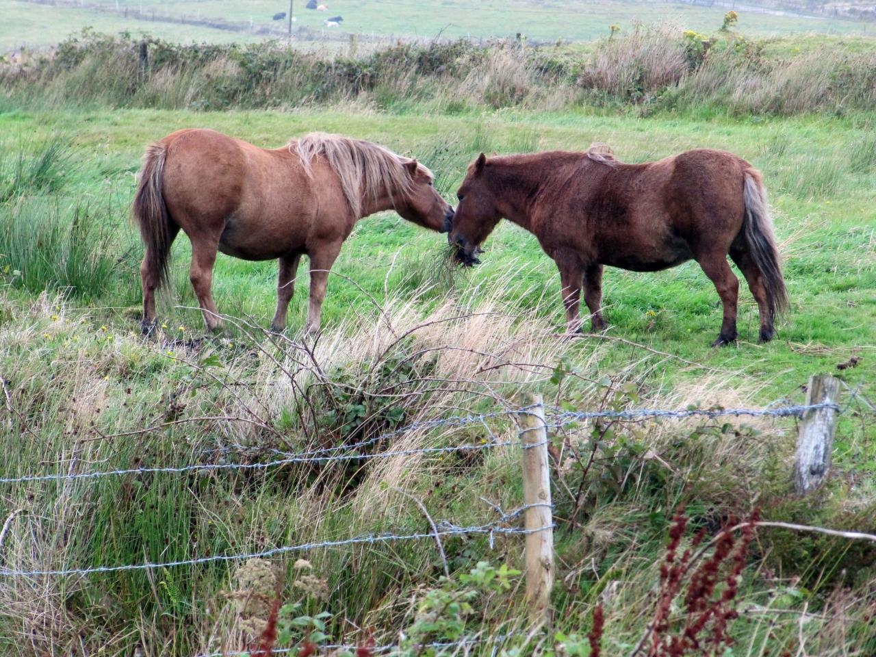 Kissing horses.
